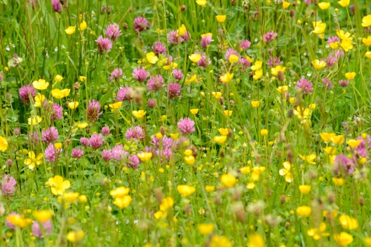 High Borrowdale Meadow