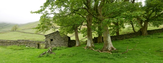 high borrowdale barn and sycamores