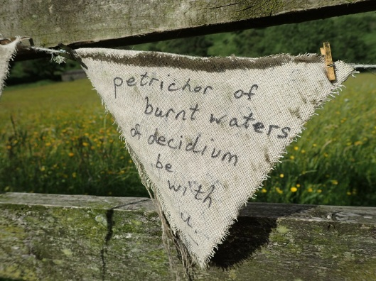 bunting in the meadow