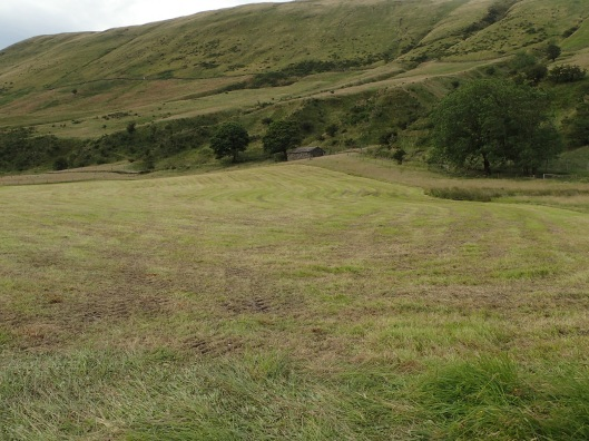 cut hay meadow